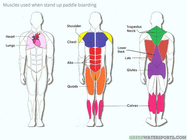Paddle : ses bienfaits sur le corps